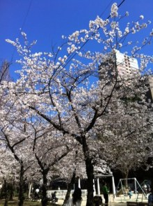 エンジェルスタイルのブログ-sakura1